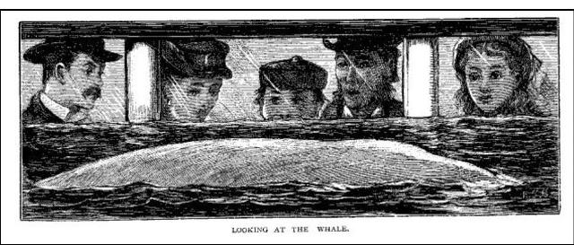 watchingwhale